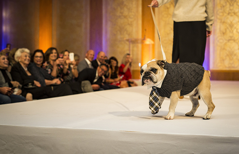 Chicago's most couture canines take over the runway