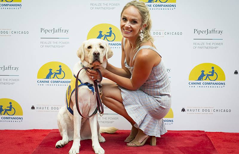 Mix and mingle with adorable future assistance dogs
