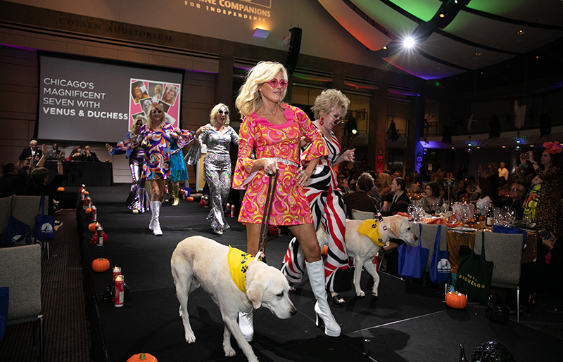 people and dogs dressed in 70's fashion walking the catwalk